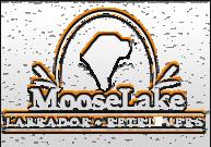 MooseLake Labradors